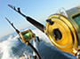 Reel in the Big One