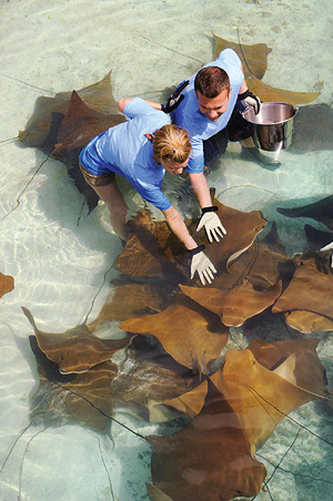 Marine Experiences at Atlantis Paradise Island